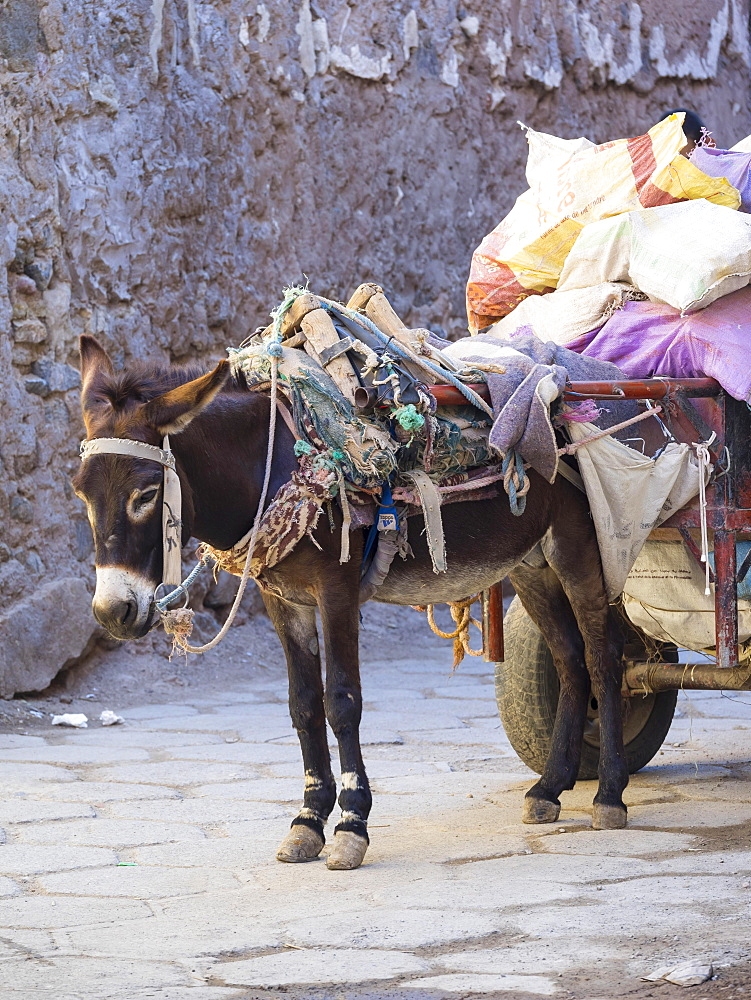 Pack donkey with a laden cart in the Medina, Marrakech, Marrakech-Tensift-Al Haouz, Morocco, Africa - 832-382940