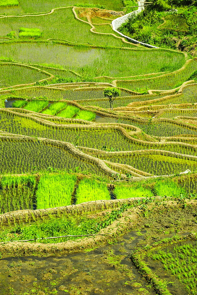 Rice terraces of Banaue, Northern Luzon, Philippines, Asia