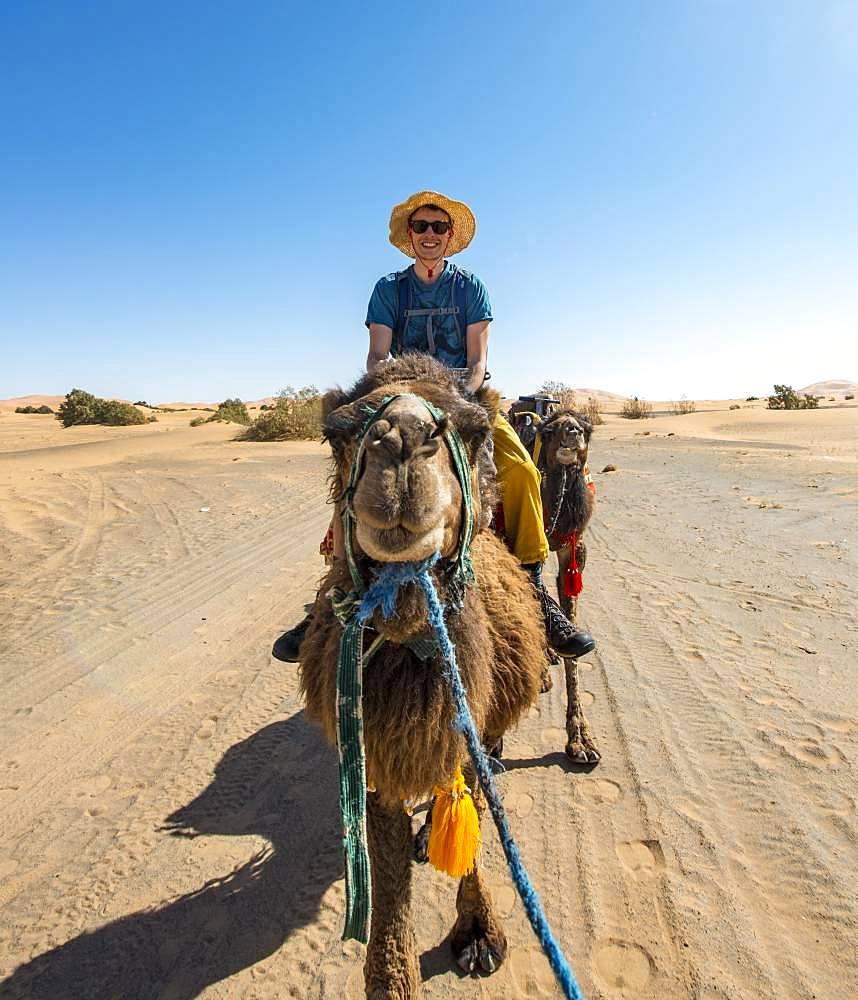 Young man riding on a camel, caravan with Dromedary (Camelus dromedarius), desert, Erg Chebbi, Merzouga, Sahara, Morocco, Africa