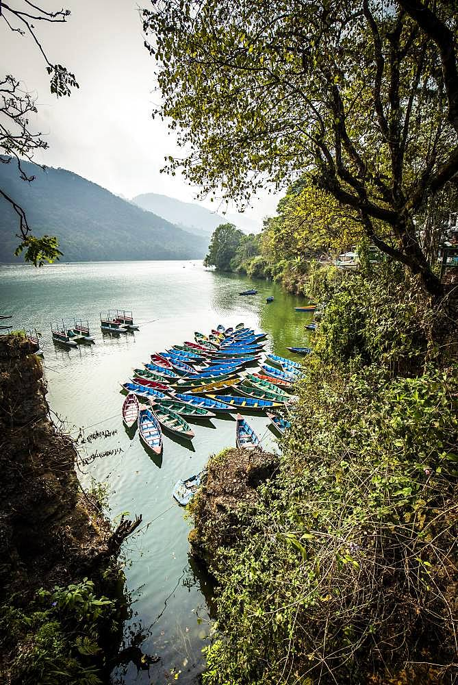 Colorful boats on Phewa Lake, Pokhara, Nepal, Asia