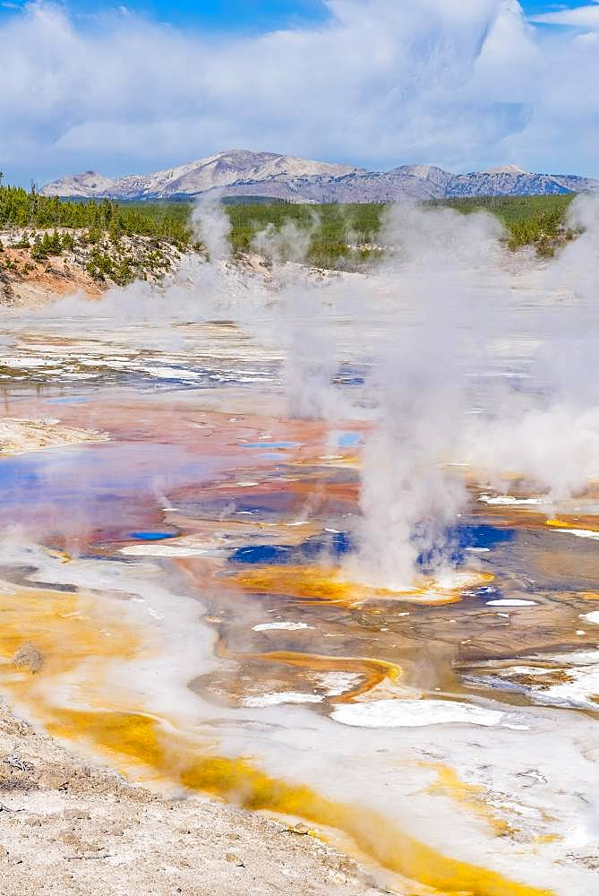 Steaming geysers, hot springs, colorful mineral deposits in the Porcelain Basin, Noris Geyser Basin, Yellowstone National Park, Wyoming, USA, North America