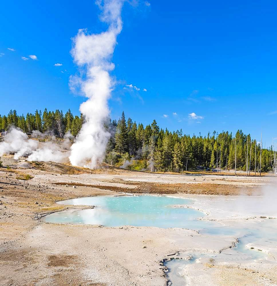 Steaming geyser, hot springs, colorful mineral deposits in Porcelain Basin, Noris Geyser Basin, Yellowstone National Park, Wyoming, USA, North America