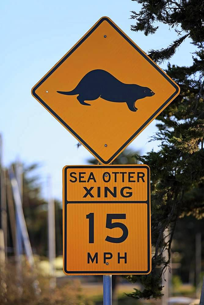 Traffic sign Caution Sea Otter, Speed Limit, Elkhorn Slough, California, USA, North America