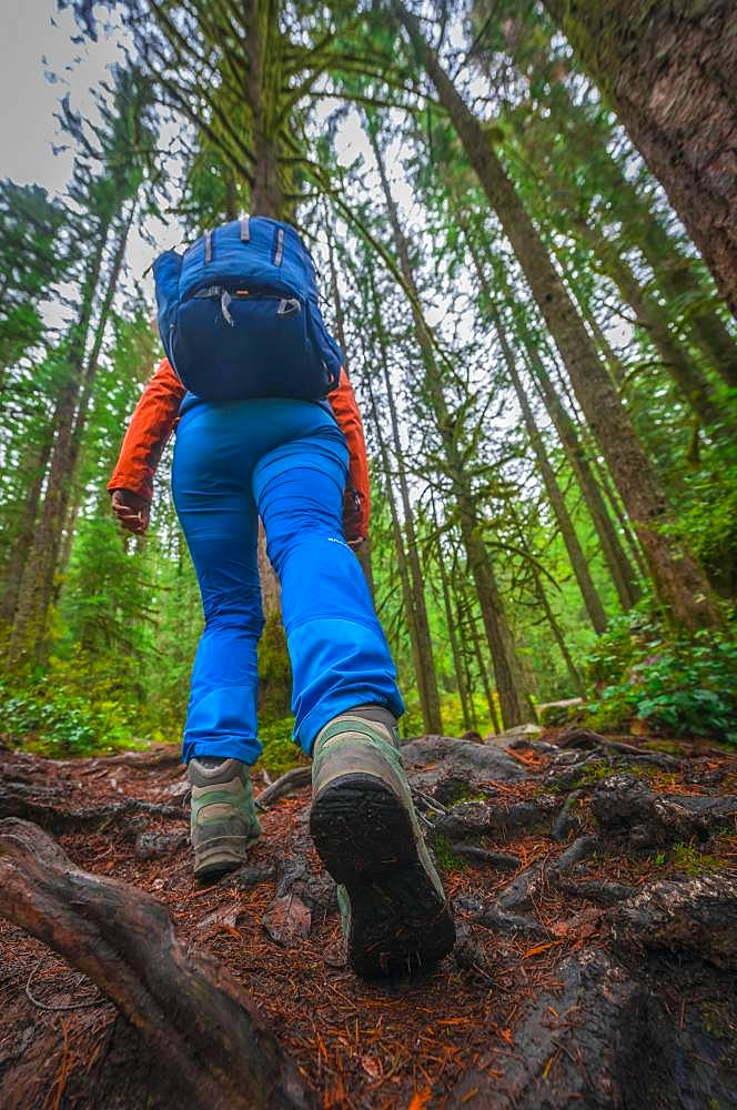 Hiker on a forest path, hiking shoe close-up, Washington, USA, North America