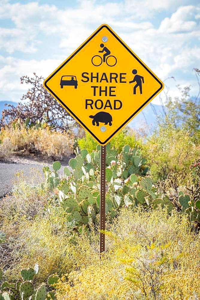 Road Sign in Sonora Desert, Tucson, Arizona, USA, North America