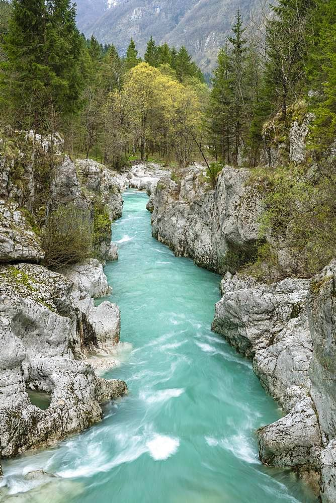 Emerald green wild river Soca flows through narrow canyon, Soca Valley, Triglav National Park, Bovec, Slovenia, Europe