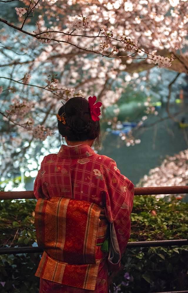 Japanese woman with kimono under blossoming cherry foams at night, Japanese cherry blossom in spring, Hanami Fest, Chidorigafuchi Green Way, Tokyo, Japan, Asia