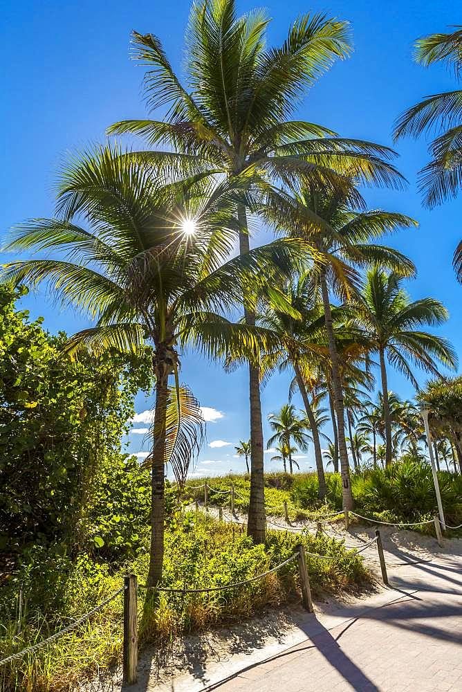 Palm trees, South Beach, Miami Beach, Miami-Dade County, Florida, USA,, North America