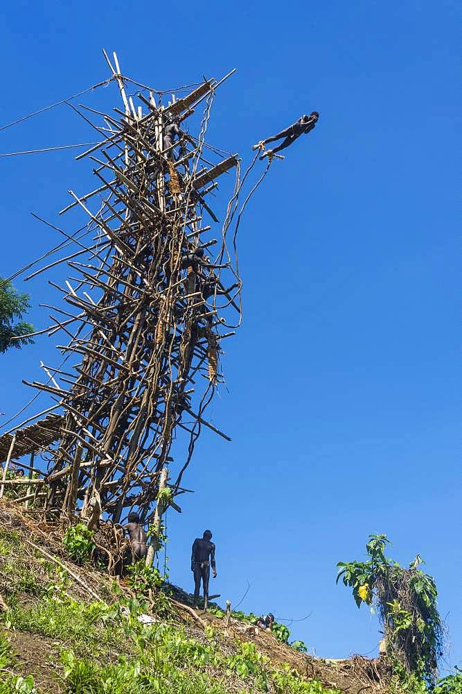 Man jumping from a bamboo tower, Pentecost land diving, Pentecost, Vanuatu, Oceania