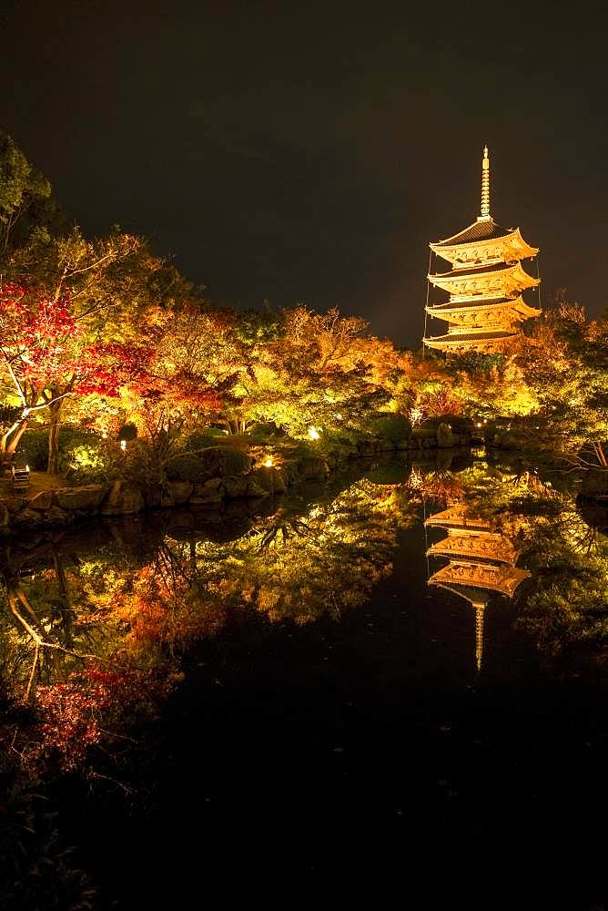 Five-storey pagoda of Toji Temple, illuminated at night for autumn foliage colouring, Kyoto, Japan, Asia