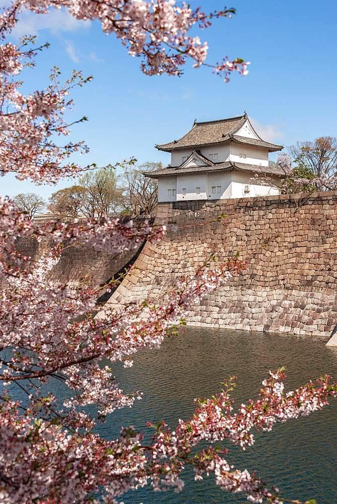 Osaka Castle with moat to the cherry blossom, Osaka Castle Park, Chuo-ku, Osaka, Japan, Asia