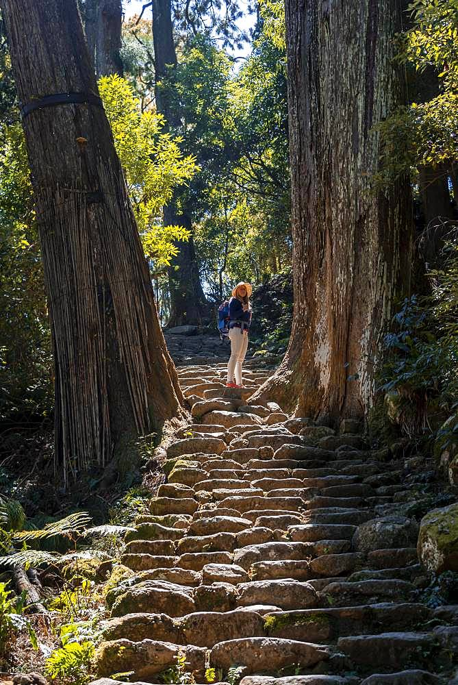 Hiker stands between big old trees, stony path in the forest to the Hirou-jinja Shinto shrine, pilgrim path Kumano Kodo, Nachisan, Wakayama, Japan, Asia
