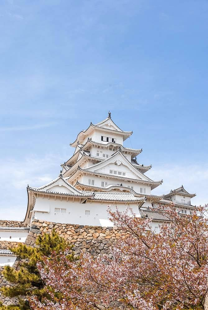 Blossoming cherry trees, Japanese cherry blossom, Himeji Castle, Himeji-jo, Shirasagijo or White Heron Castle, Himeji, Hyogo Prefecture, Japan, Asia