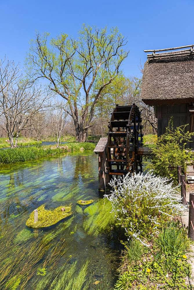 Water mill on a river, Daio Wasabi Farm, Nagano, Japan, Asia