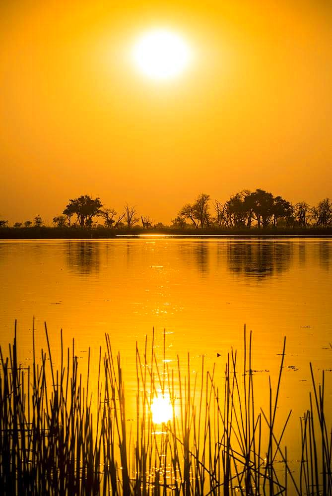 River landscape in the Okavango Delta at sunset, Moremi Wildlife Reserve, Ngamiland, Botswana, Africa