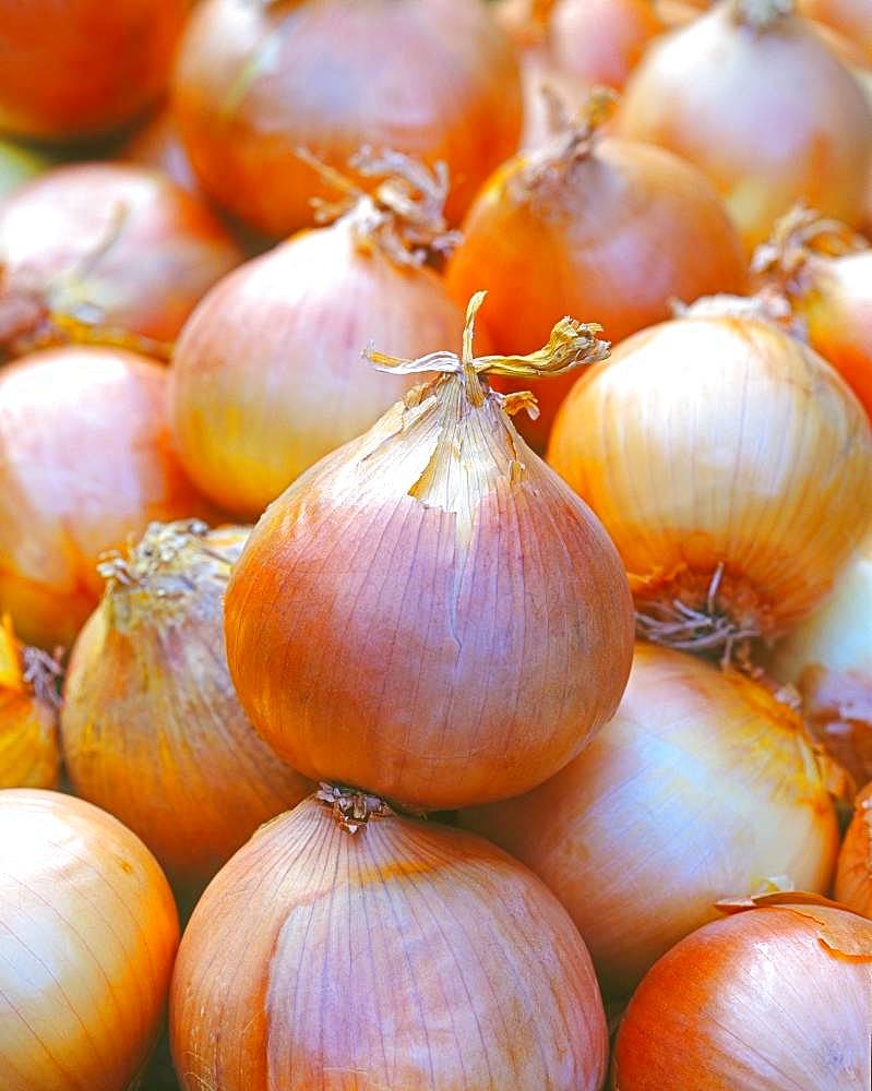 Vegetable onions, Germany, Europe