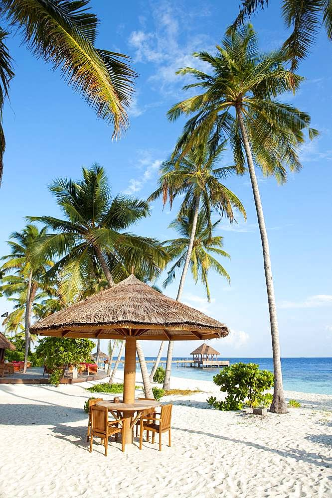 Stranbdar with parasol on the beach with (Cocos nucifera), Filaidhoo, Raa Atoll, Maldives, Asia