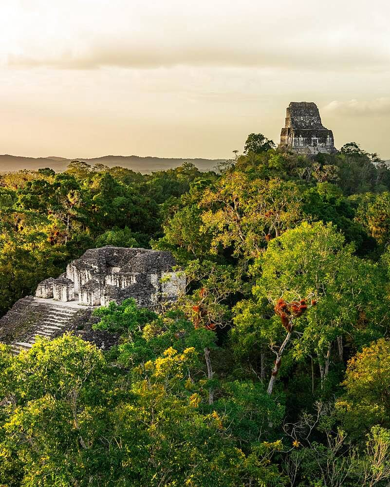 Mayan temple in the rainforest, ancient Mayan city, Tikal National Park, Guatemala, Central America - 832-389144