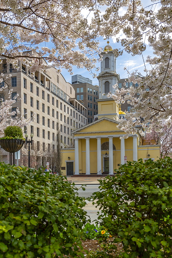 View of the St John's Episcopal Church and spring blossom, Washington D.C., United States of America, North America - 844-19878