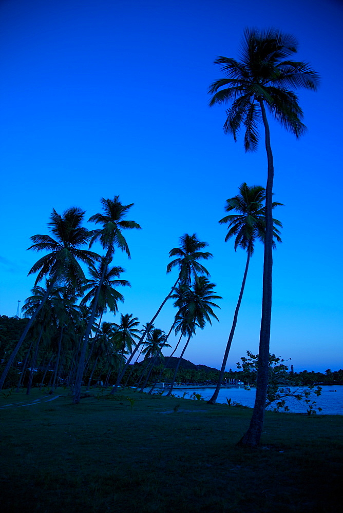 Palm trees and beach at dusk, Morris Bay, St. Mary, Antigua, Leeward Islands, West Indies, Caribbean, Central America