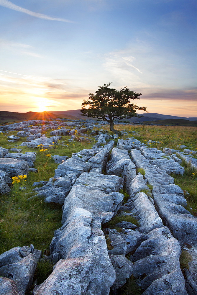 Lone tree and Limestone Pavement at sunset, Settle, Yorkshire, England, United Kingdom, Europe - 845-979