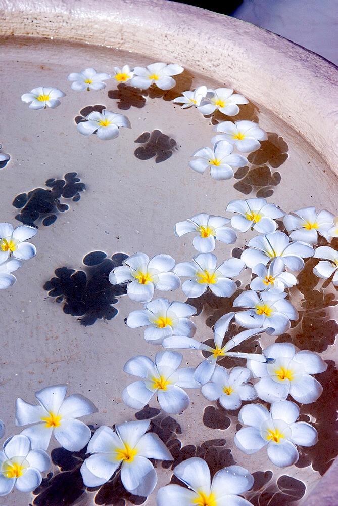 Flower petals in hotel lobby, Goa, India, Asia - 846-1133