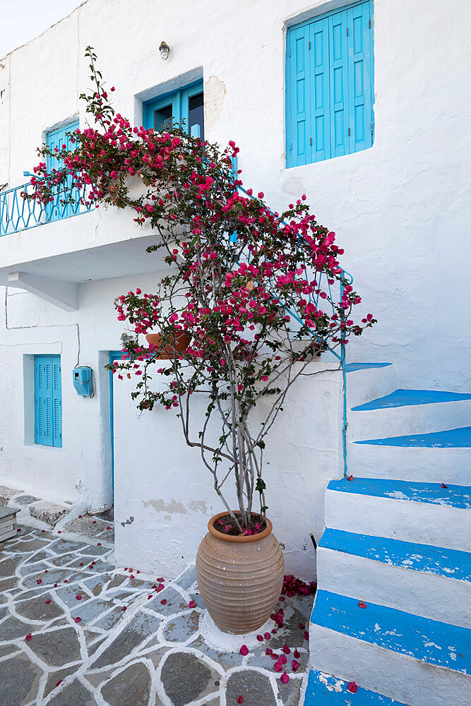 Facade of traditional white and blue house with bougainvillea, Plaka, Milos, Cyclades, Aegean Sea, Greek Islands; Greece; Europe