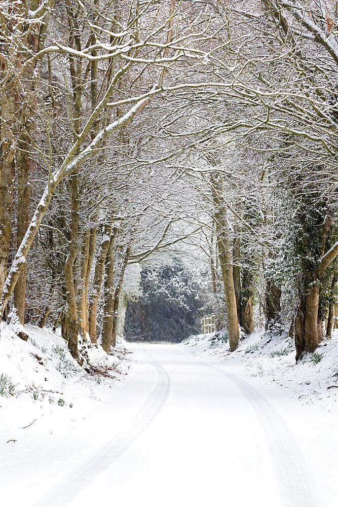 Snow covered tree-lined country lane, Burwash, East Sussex, England, United Kingdom, Europe