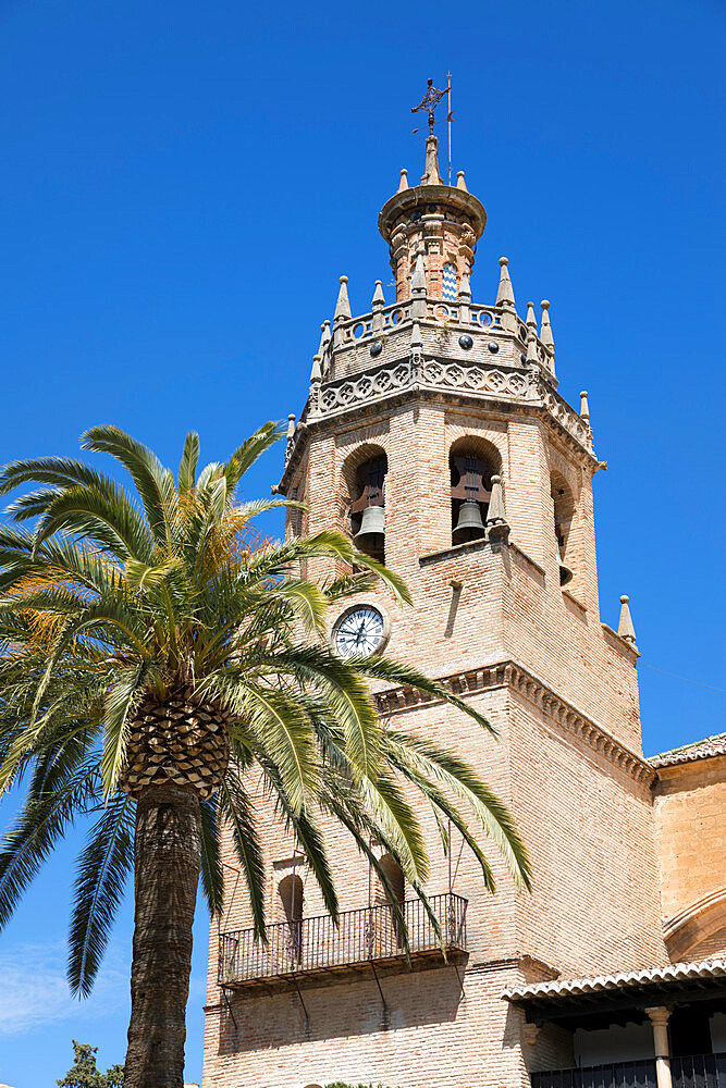 Palm tree and tower of the Iglesia de Santa Maria la Mayor, Ronda, Andalucia, Spain, Europe