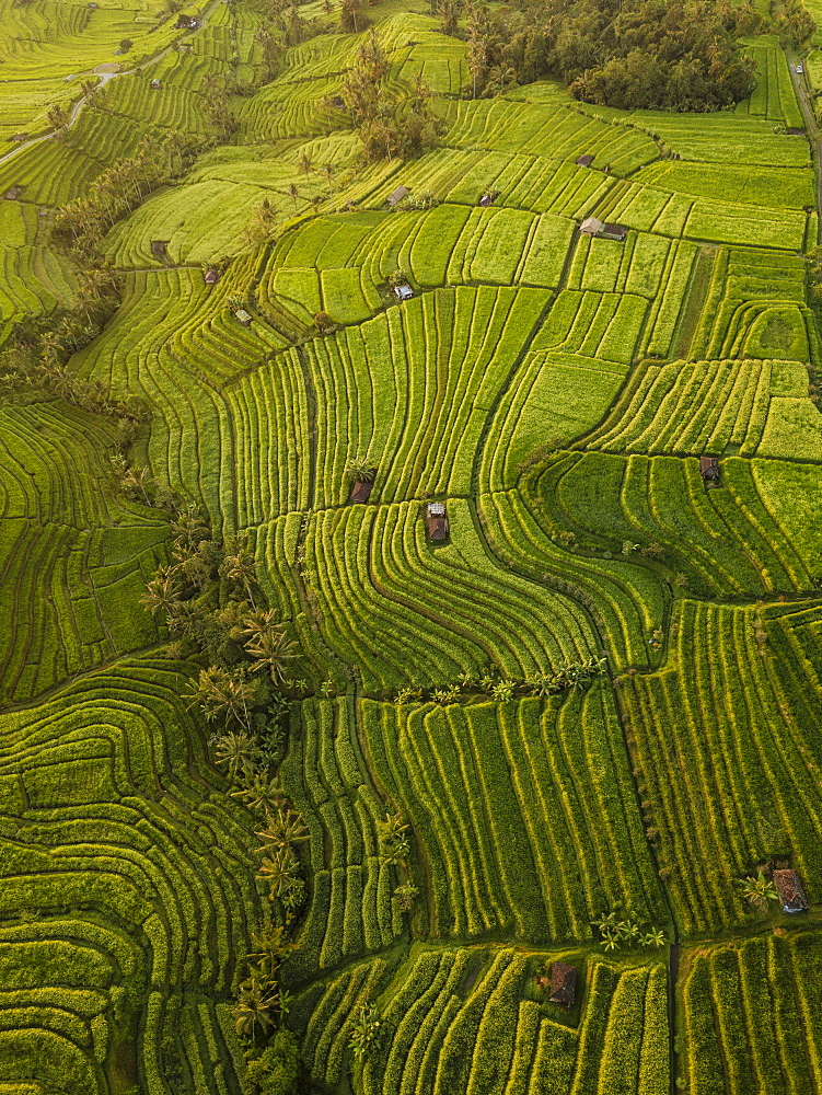 Aerial view of Jatiluwih Rice Terraces, Tabanan, Bali, Indonesia, Southeast Asia, Asia