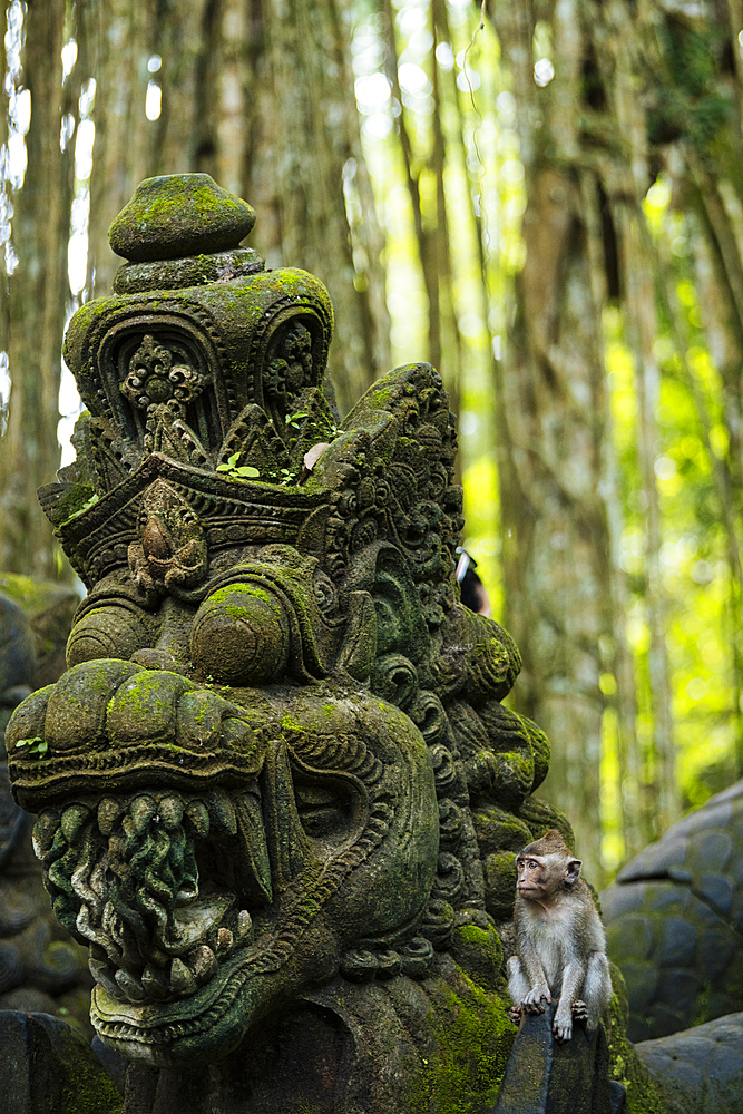 Monkey Forest Sanctuary, Ubud, Bali, Indonesia, Southeast Asia, Asia