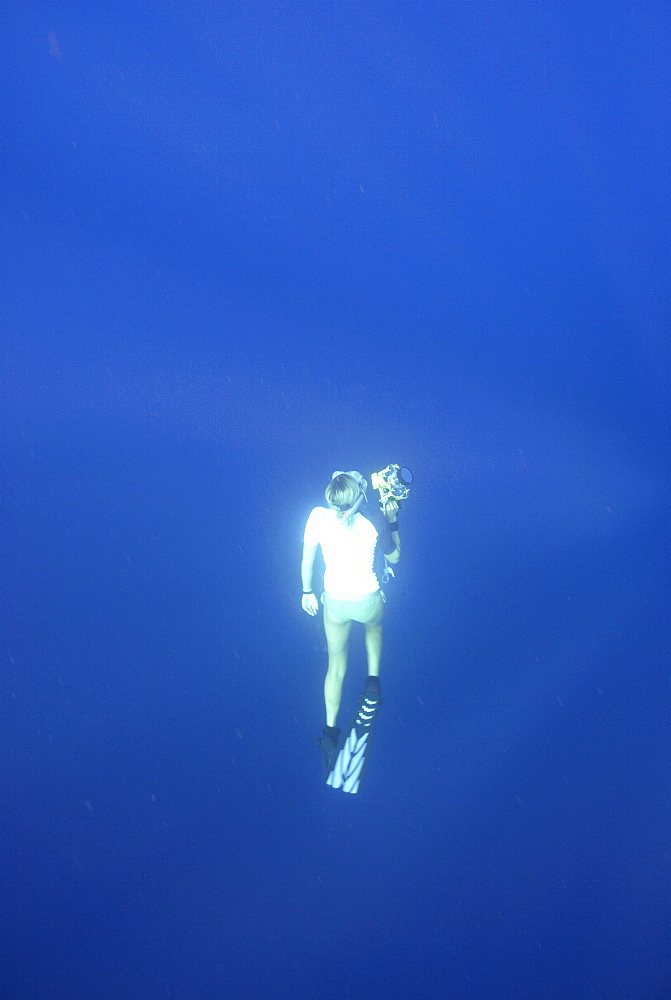 Whale shark researcher snorkelling underwater with camera, Mahe, Seychelles, Indian Ocean