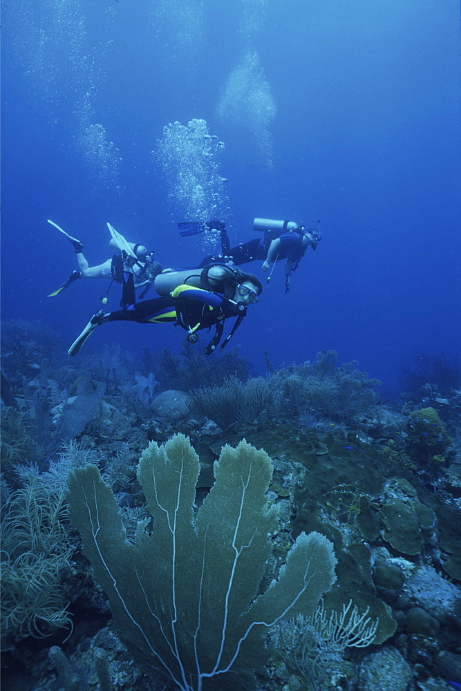 divers enjoying reef diving in Barbados