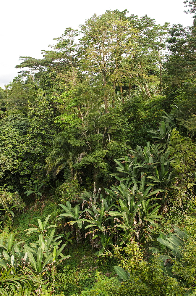 Lush forest on the island of Sao Tome.