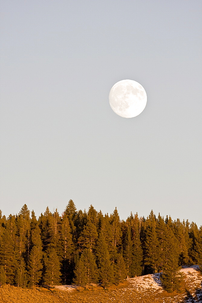 A full moon rising over the Haden Valley in Yellowstone National Park.in the late fall.