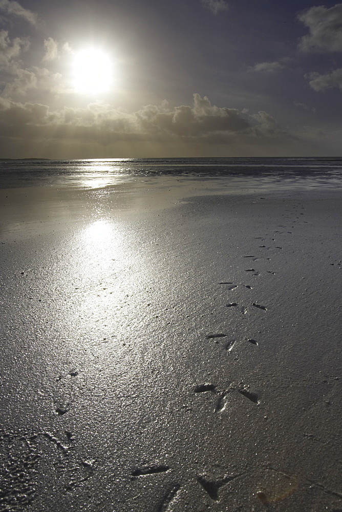 Tiree landscape - Soroby beach, Gull foot prints leading up to a rising sun. Soroby, Argyll, Scotland, UK