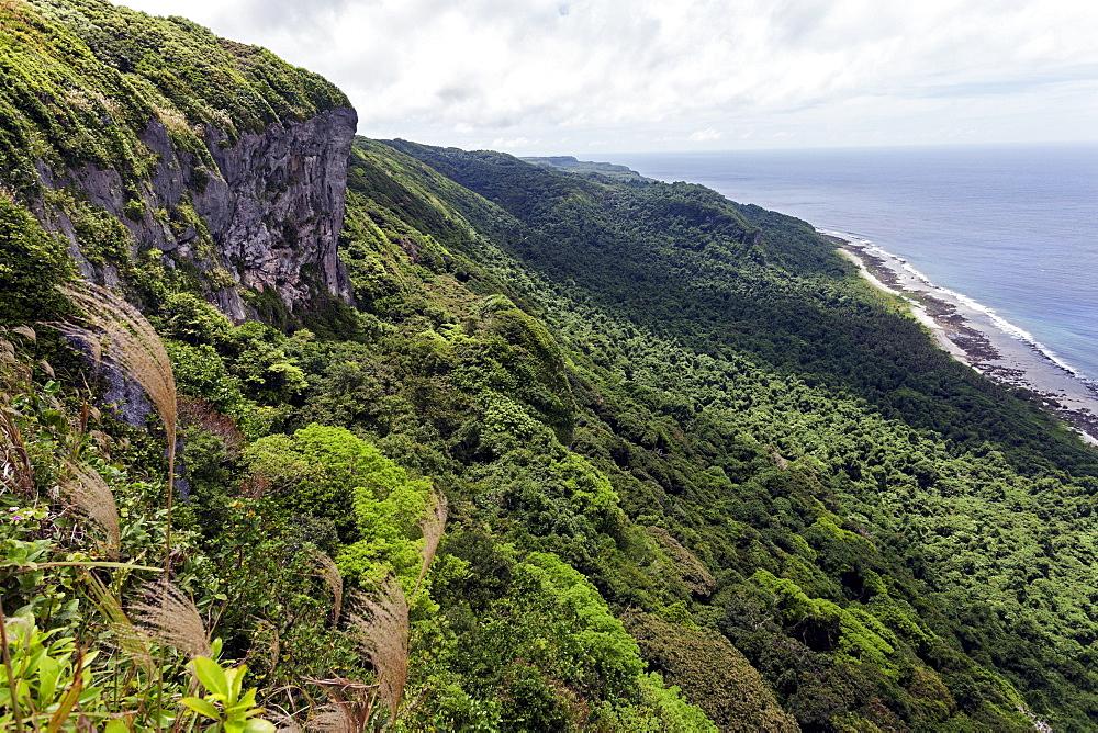 Vegetation, Eua Island - Tonga