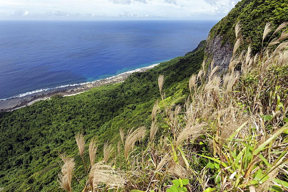 Vegetation, Eua Island, Tonga