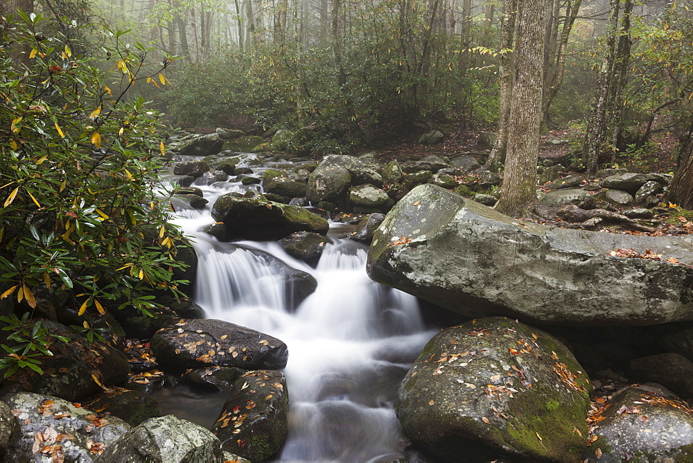 Stream in forest, Smoky Mountains Nationa Park, Tennessee
