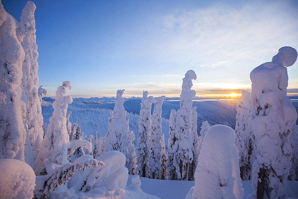 Trees covered with fresh snow, USA, Montana, Whitefish