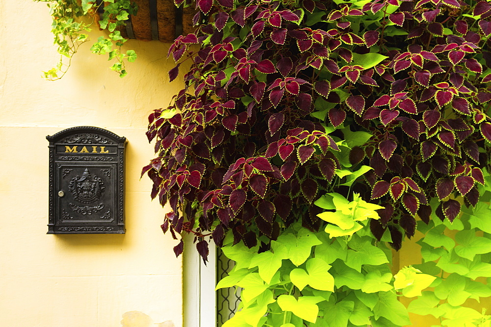 USA, South Carolina, Charleston, Close up of house wall with ivy and mailbox