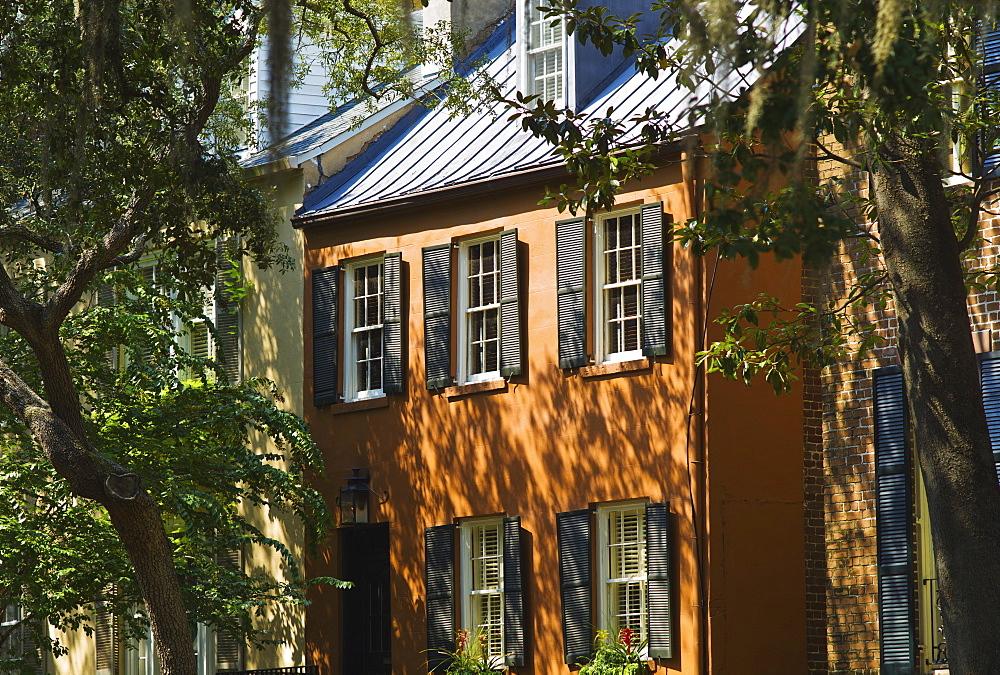 USA, Georgia, Savannah, Hose among trees