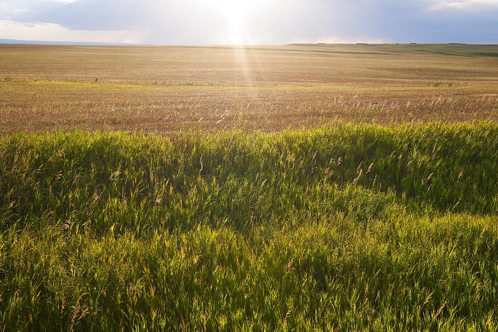 Buffalo Gap National Grasslands, Field at sunset
