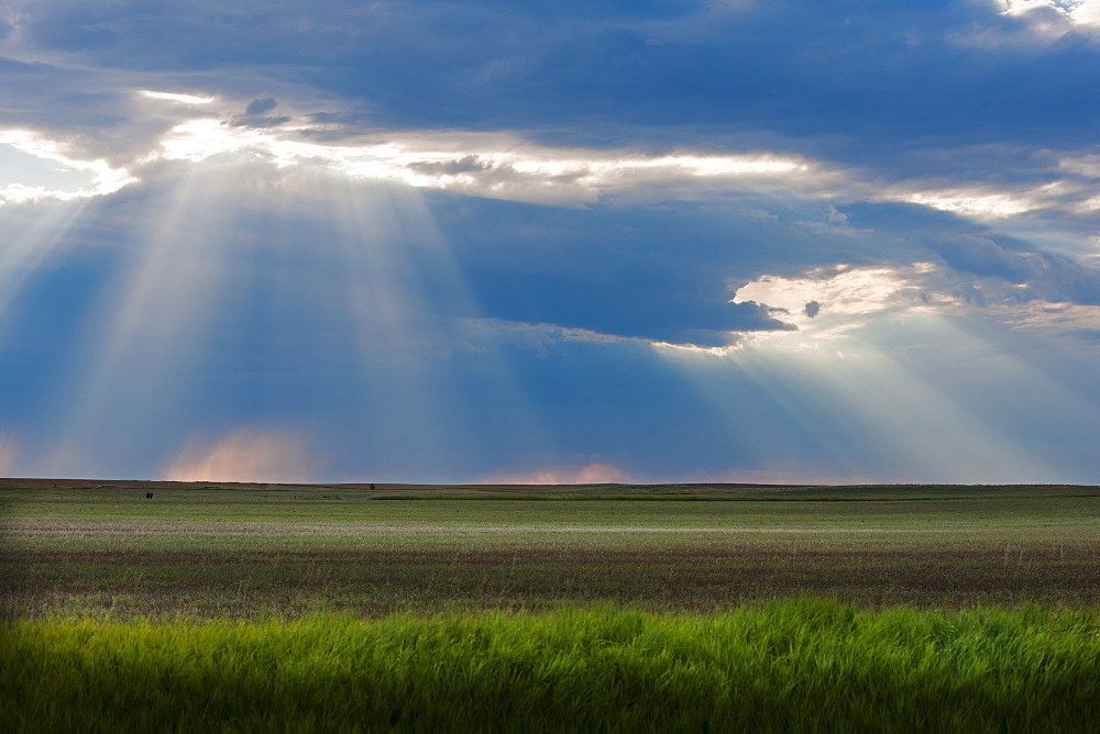 Sunrays shining through clouds over field