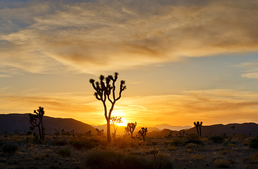 USA, California, Joshua Tree National Park at sunset, USA, California, Joshua Tree National Park - 1178-15563
