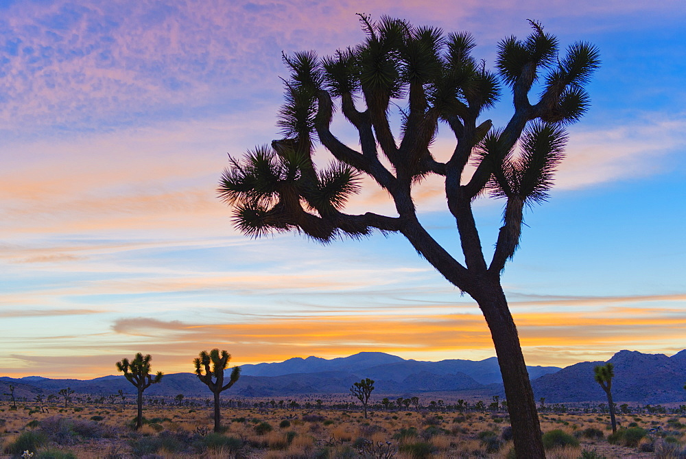 USA, California, Joshua Tree National Park, Desert at sunrise, USA, California, Joshua Tree National Park