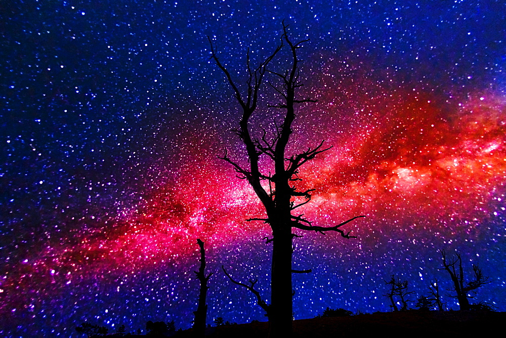 Silhouettes of dead trees against Milky Way, USA, Utah, Bryce Canyon