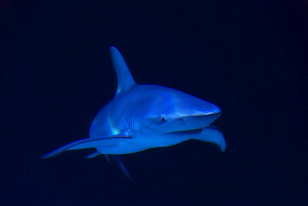 Underwater view of shark in sea