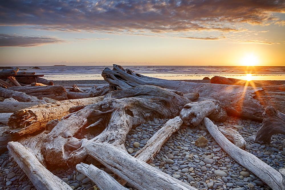 Driftwood on beach, Olympic National Park, Washington