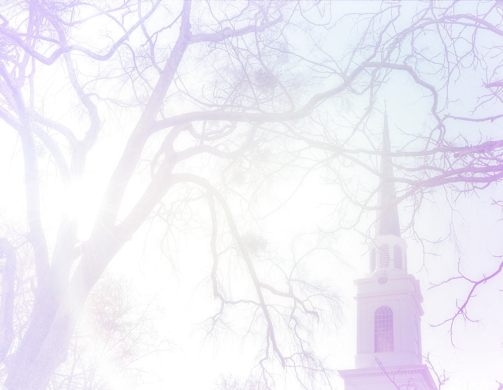 Church steeple behind tree branches, North Carolina